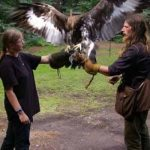 Falconry Edinburgh