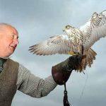 Falconry Shropshire