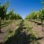 Sparkling Wine Tour East Sussex