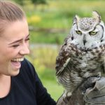Falconry Tunbridge Wells