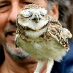 Falconry Leicestershire