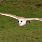 Owl Encounter Derbyshire