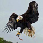 Birds of Prey Dorchester