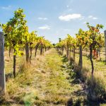 Stanlake Park Wine Estate Tour & Tasting For Two