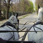 Carriage Driving West Sussex