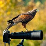 Birds of Prey Photography
