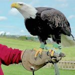 Falconry Halifax