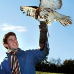 Birds of Prey Experience
