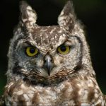 Owl Experience East Sussex