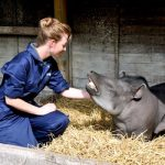 Zoo Keeper for a Day at Drayton Manor Park